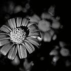 Dark flowers by CezB