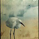 Bird by weirdbird