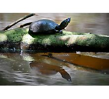 YOUNG TURTLE ON A LOG Photographic Print