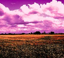 Purple over Barley by charlylou