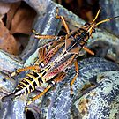 Grasshopper From Above by AuntDot