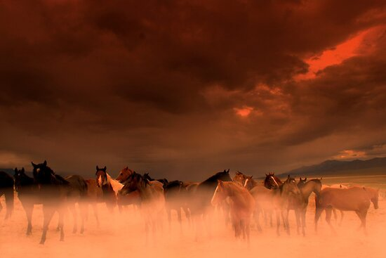 Dust Storm  by Jeanne  Nations