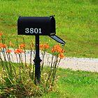 Got Mail by Susan Blevins