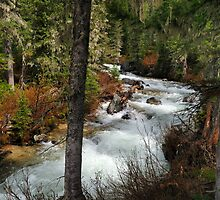 Cascade Creek - Grand Teton National Park by Mark Heller