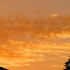Golden Sunrise by Kristy  Dorris