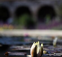 Lotus reflection against Mission background by Sarah Vilar