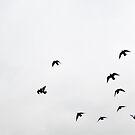 ...our love sings like birdwings... by John Englezos