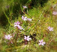 pink Redstem Filaree wildflowers #1 by Dawna Morton