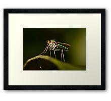 Dolichopodid Fly Framed Print