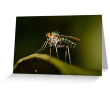 Dolichopodid Fly Greeting Card