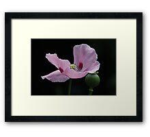 Pink Poppy and Pod Framed Print
