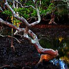 nudgee wood by Mark Malinowski