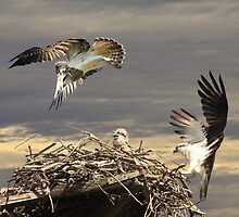 Family Nesting by byronbackyard