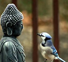 Buddha & The Jay by Steven Knox