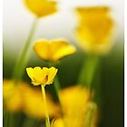Buttercups by Suzanne Edge