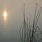 The Reeds and the Sun by teresa731