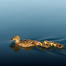 Little Ducklings by Ted Lansing