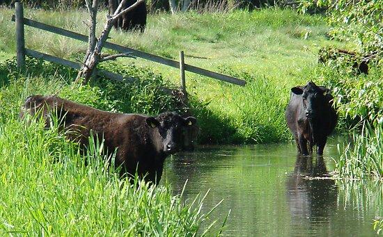 cows by purpleminx