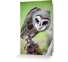 Sooty Owl Greeting Card