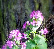 purple wildflowers by a tree by Dawna Morton