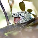 Gray Treefrog 2  by Sean McConnery