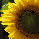 Sunflower Dressing For Summer by Misty Lackey
