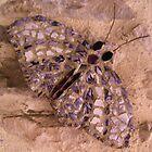 moth by anngramat