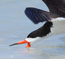 Skimming right in front of your Eyes by Phillip  Simmons