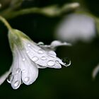 Water Drops by Sophie Matthews