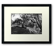 Willow Tree Sunshine Framed Print