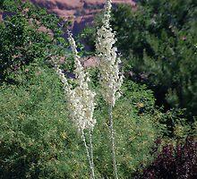 Joshua Yucca Tree  by Stormygirl