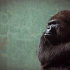 Gorilla by TomConger