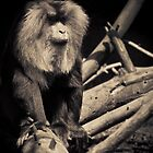 Seated Macaque by TomConger