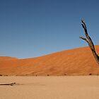 Petrified trees - Sossusvlei, Namibia  by Graeme Shannon