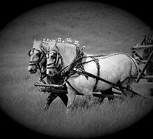 The Grey Team, Bar U Ranch by Al Bourassa