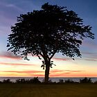 Tranquil - Lake Erie by Thomas Lawn