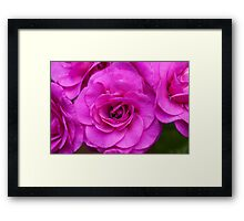 Very Pink Framed Print