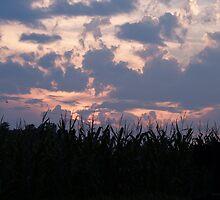corn in the field, bird on a wire by John Carey