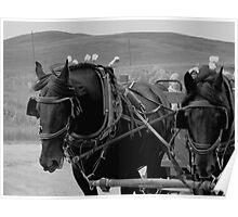 The Black Team, Bar U Ranch Poster