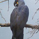 Hello, Mister Bird! by teresa731