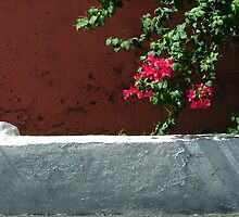 Red Wall w/flowers - Nassau, Bahamas by ArtsGirl2
