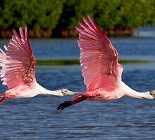 Two Spoonbills in Flight by Karen  Moore