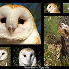 Barn Owl ~ Raptor Series by Kimberly P-Chadwick