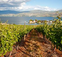 A view from the vineyard by zumi