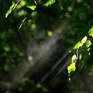 Breath by Faith Barker Photography