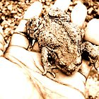 Mr Toad by tupat