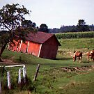 Barn with Horses by Phil Campus