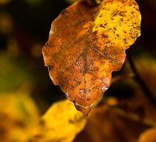 Golden Leaf by Elaine123