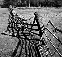 Fence and Trees near Point Sands by peartree