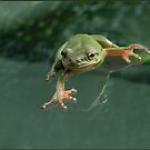 This Little Froggie... by CarolD